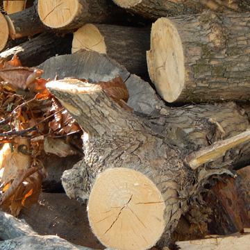 Section felling is when we dismantle the tree section by section from the top down and we are trained to do this safely and efficiently.